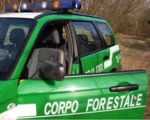auto-forestale
